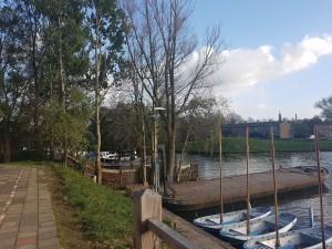 Zieke en dode bomen kappen op zaterdag 25 november